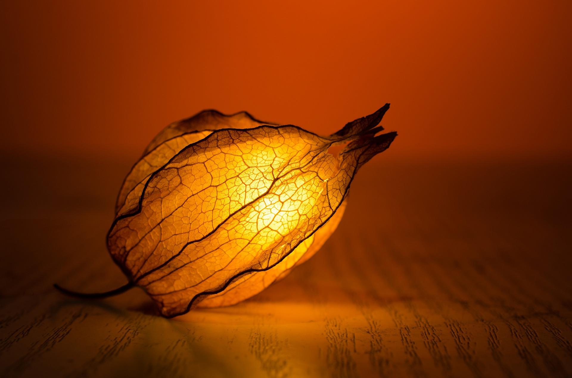 The Glow Flower